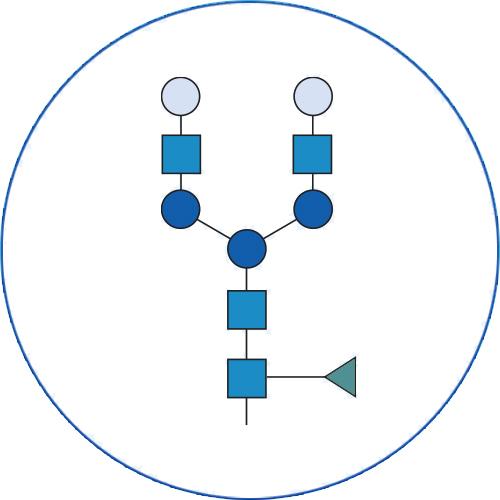 glycan analysis